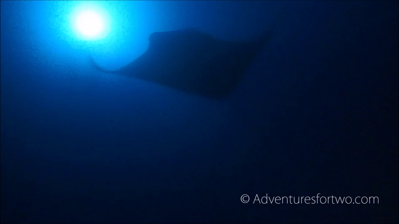 Giant oceanic manta ray encounter during dive in Hawaii off the coast of Kona