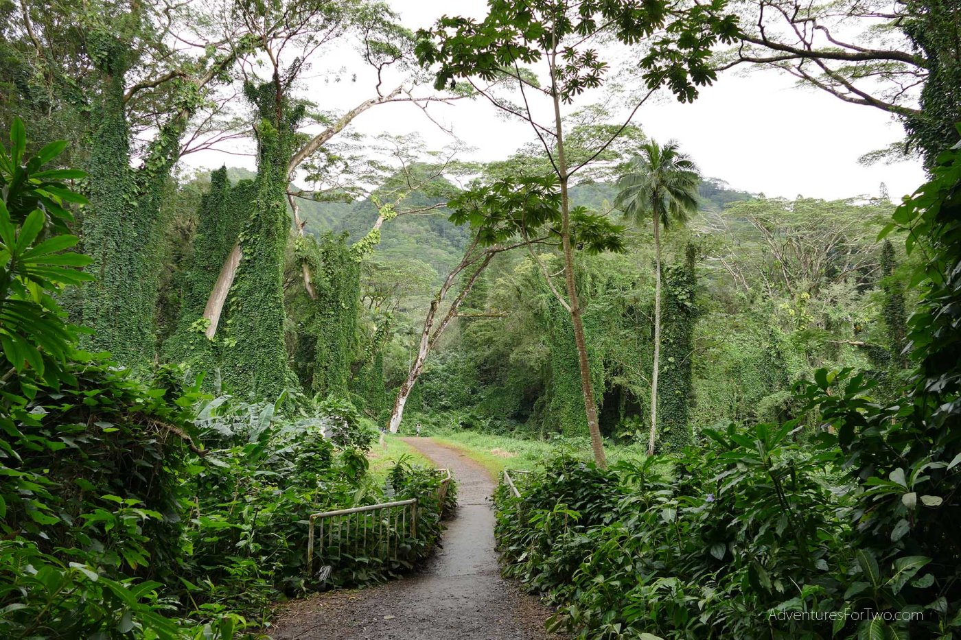 The lush jungle to get to Manoa Falls in 4K video