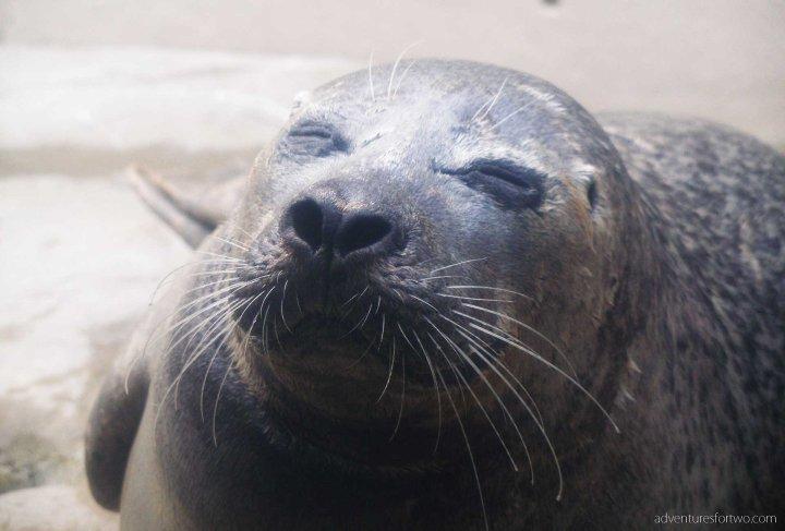 Boston Aquarium Seals