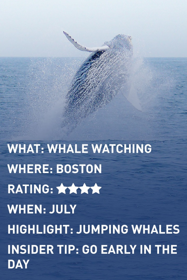 WHALE WATCHING infographic