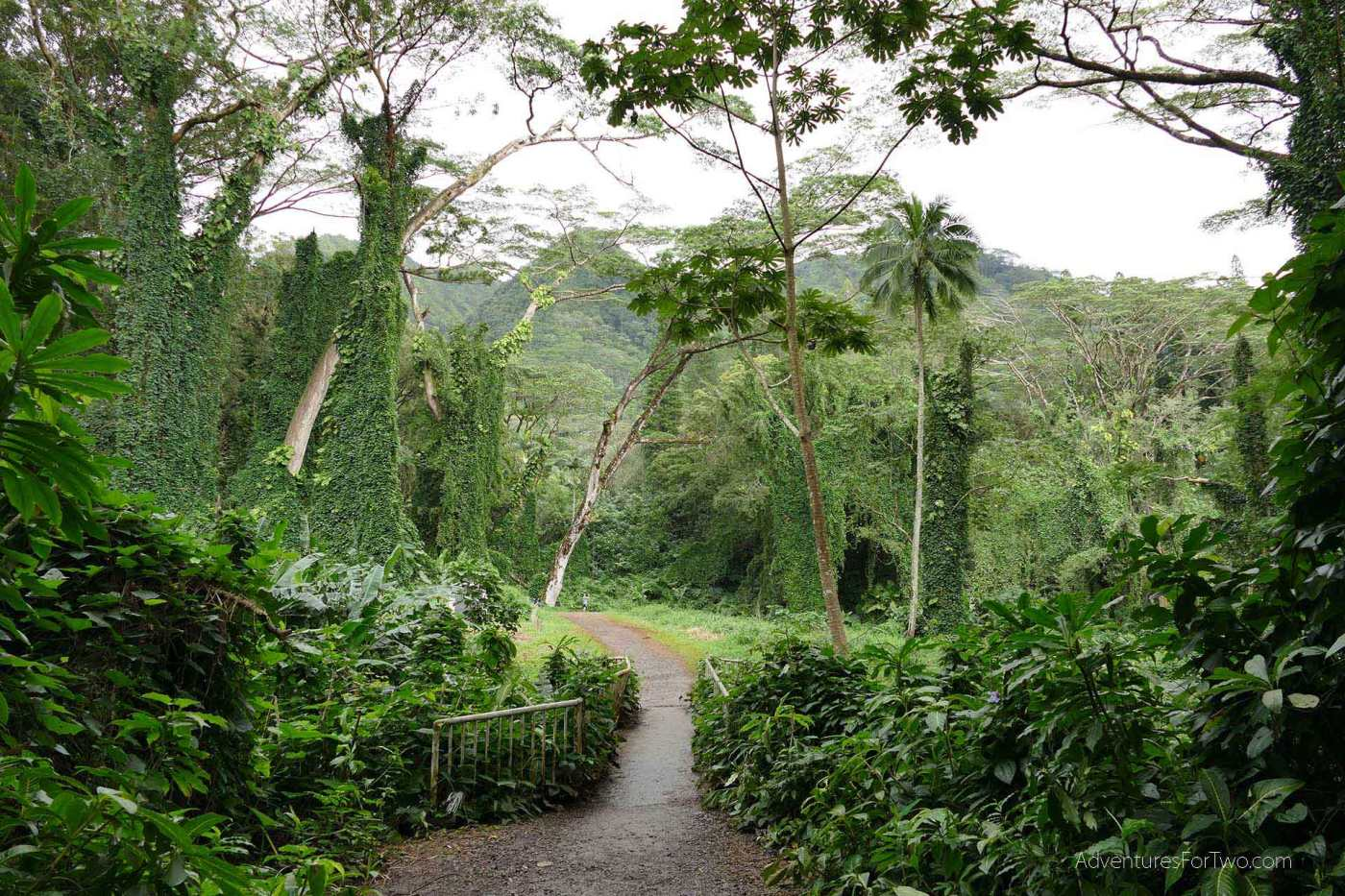 Manoa Falls Jungle