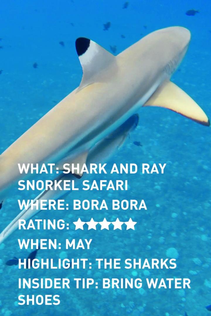bora-bora-sharks-infographic