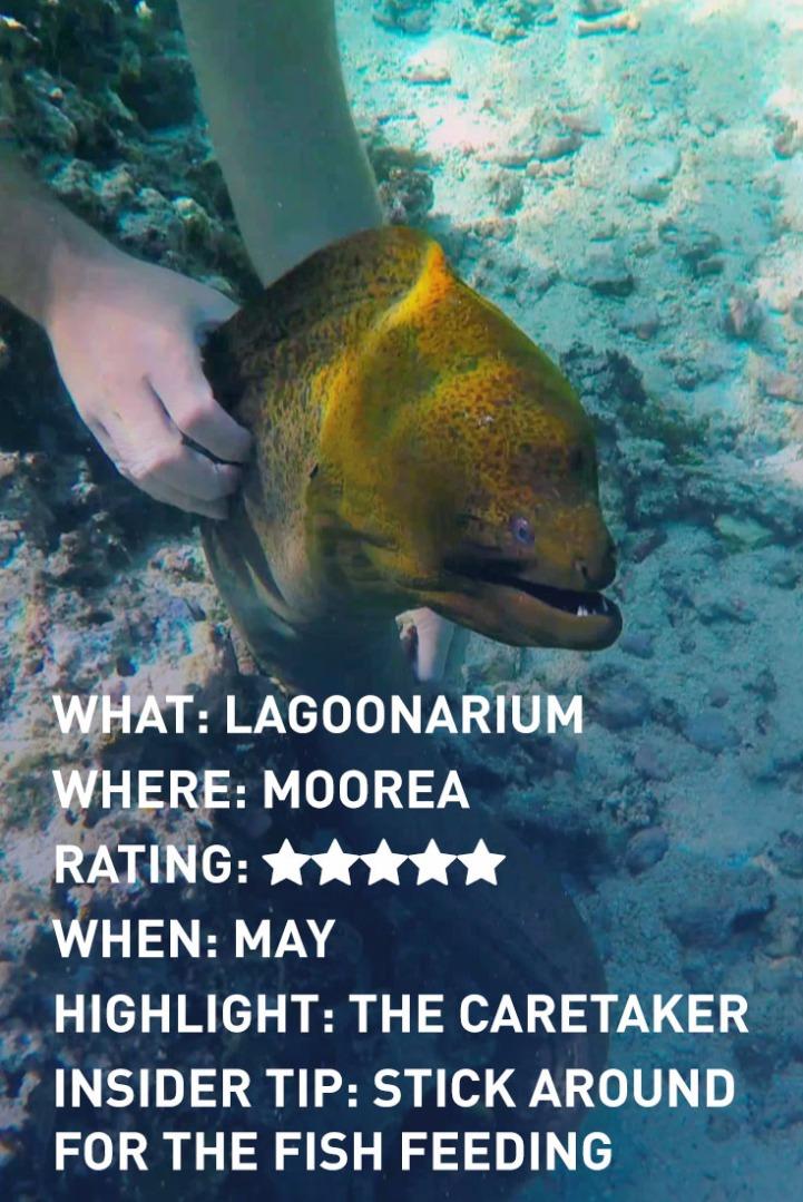 moorea-lagoonarium-infographic