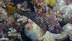 bahamas fish snorkeling